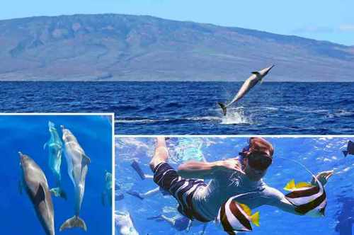 Kaulana Lanai Snorkel and Dolphin Watch
