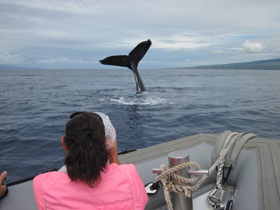 whale tail, fluke, maui, humpback whale,