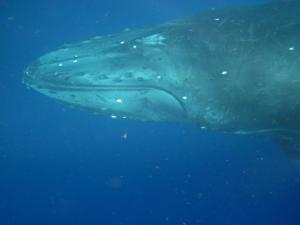 whale song pic