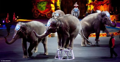 circus-elephants-cc-ana-gremard-article-image-1200-630-1024x538