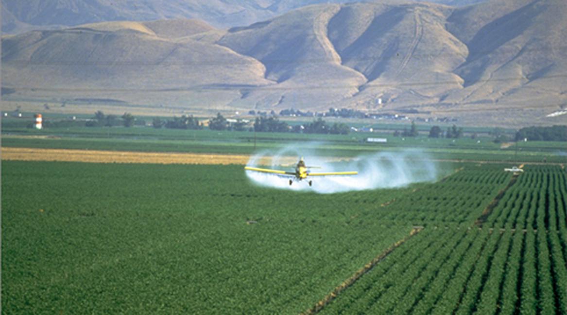 spray-2_33425