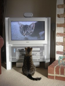 450px-Fatty_watching_himself_on_TV