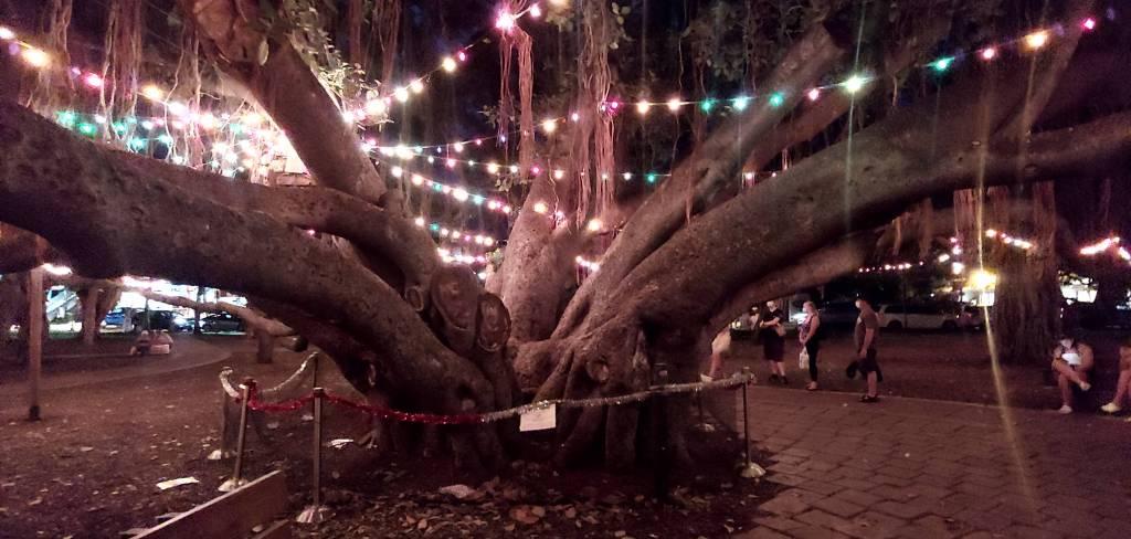 Banyan Tree at Christmas - Lahaina Hawaii - 2020