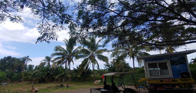 Tropical Hawaiian views at Maui Taco Loco food truck garden