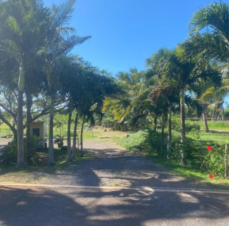 Tropical Maui farm entrance