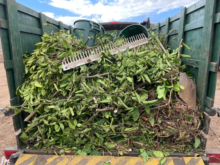 Maui Tree Trimming Green Waste Haul Away