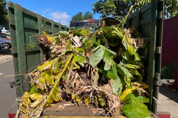 hauling green waste maui palm fronds
