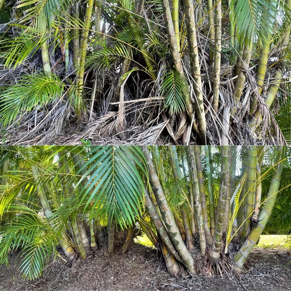 Palm Frond Removal