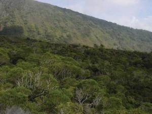 The Hawaiian mesic forest found in Kaupō Gap is one of the most diverse ecosytems found in the state. Photo by Woody Mallinsin