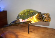 turtle.glass
