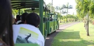 Tropical plantation Maui activity