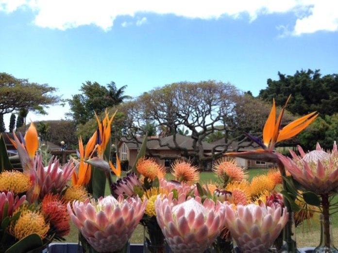 Montessori School of Maui