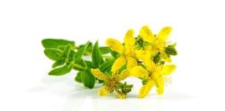 Benefits Hypercium Perfoliatum