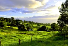 Regenerative farming Maui