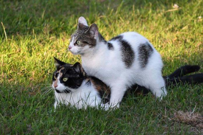 motherhood nature cats