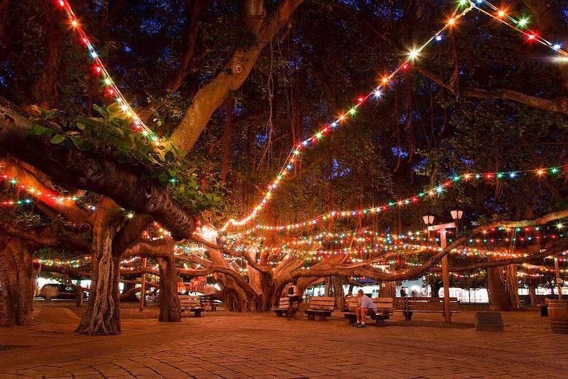 Lighting Banyan Tree Lahaina 2019