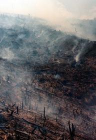 Burning Madegascar Forest