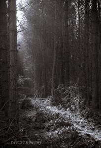 Maulden Woods Dark Area