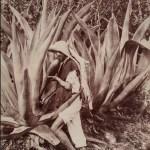 Tlachiquero. Chupando el pulque, 1896, Alfred Briquet, impresión a la albúmina, colección Ricardo B. Salinas Pliego. (cortesía del Museo Nacional de Arte).