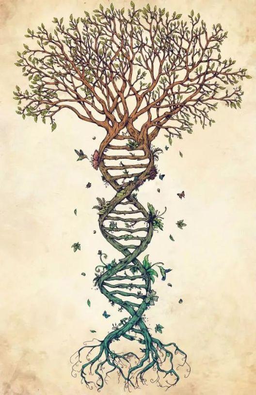 genetic-tree