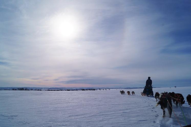 dogs enter the sun