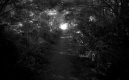 Down The Rabbit Path