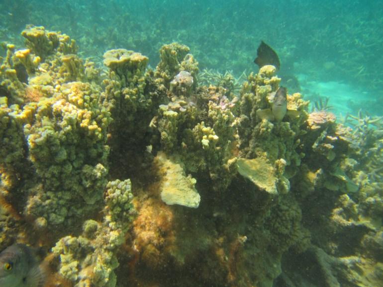 Corals at Trou d'eau douce rich in fish
