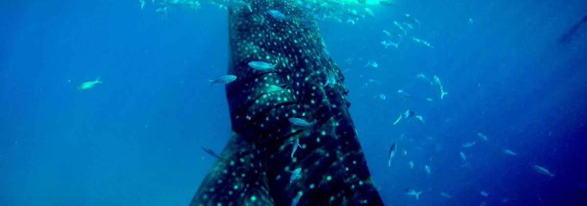 Efficienza energetica la balena è l'animale più efficiente