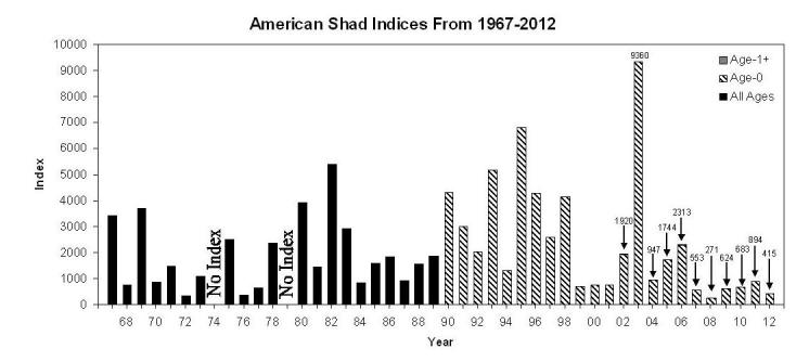 American Shad Indices, 1967-2012, Fall Midwater Trawl