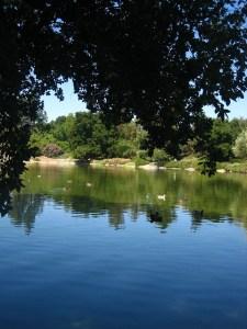 Putah Creek 1