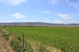 Antelope Valley Agriculture Apr 2011 #2
