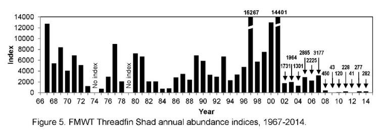 FMWT Threadfin shad