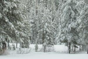 DWR?s Frank Gehrke of California?s Snow Surveys performs snow survey with California Legislative fellows Toni Lee and Karen Morrison.