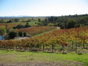 Armida_Winery_vineyards_0001
