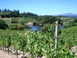 Russian River vineyard by Ward Kadel