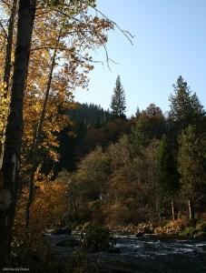 NorCal Creek Flickr