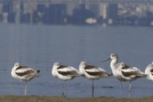 Salt Pond Sliderbox