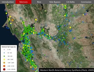 USGS Mercury Rice Delta_Page_11
