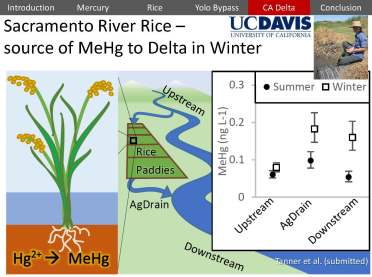 USGS Mercury Rice Delta_Page_41