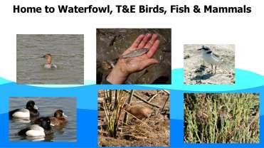 Crowfoot Floodplains PDF_Page_61