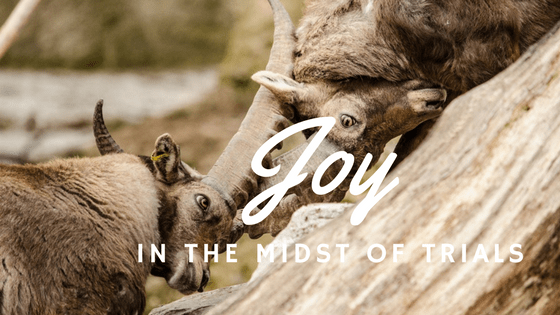 Great Joy James 1