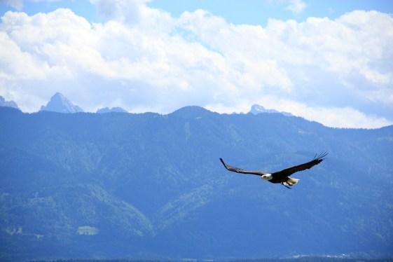 Fearless Leaders - Eagles