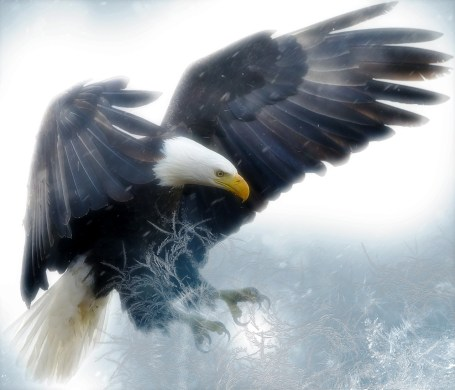 """""""I carried you on eagles' wings"""""""