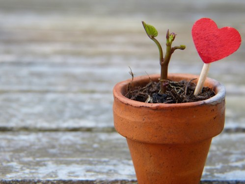 Love is where good grows