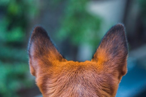 Ears to hear!
