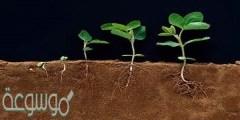 ما جزء النباتات المسؤول عن امتصاص الماء و الأملاح من التربة
