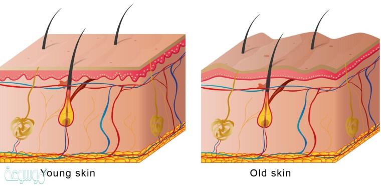 الطبقة الخارجية من الجلد............