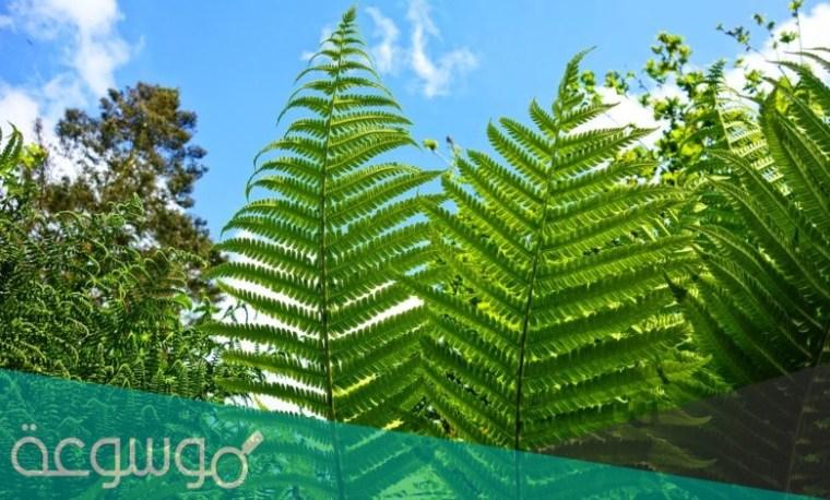 تمتلك النباتات الوعائية أشباه الجذور وأشباه الأوراق