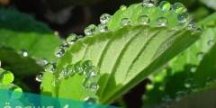 ما هي عمليه النتح في النبات