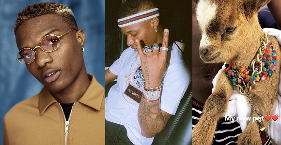 WHAT DO YOU THINK OF WIZKID GETTING HIMSELF A GOAT AS A PET?